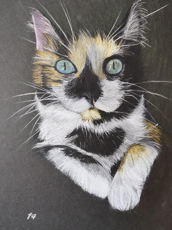 Mottled Cat