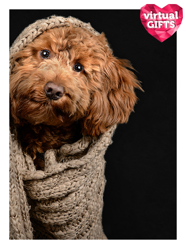 Heat a kennel
